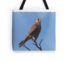 Brown Falcon Tote Bag