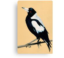 Australian Magpie in Coloured Pencil Canvas Print