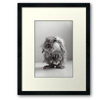 Soggy cute baby bunny rabbit Framed Print