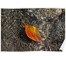 Submerged Beauty - Sunny Ripples on a Vibrant Multicolour Cherry Leaf Poster