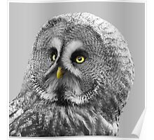 Aspen, Great Grey Owl Poster