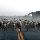 Ewe's On The Move by © Loree McComb