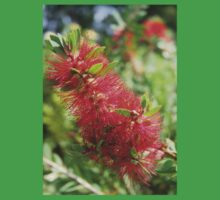 Calliandra Haematocephala Red Powderpuff One Piece - Short Sleeve