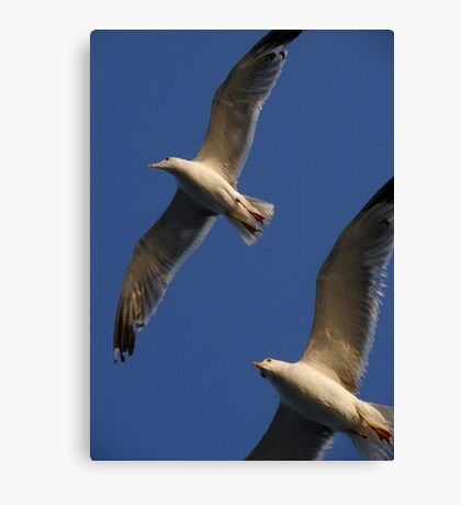 Seagulls In Flight Canvas Print