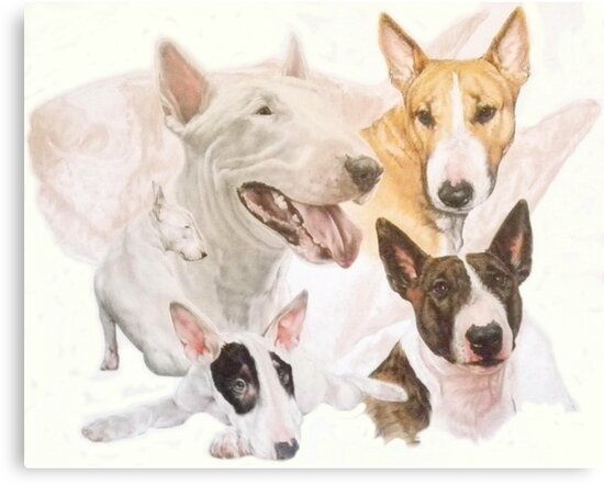 Bull Terrier /Ghost by BarbBarcikKeith