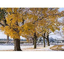 Fall Snow 2 Photographic Print