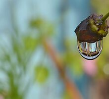 Shed in a Drip by relayer51
