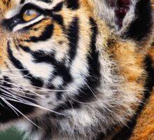 Regal Tiger Sticker
