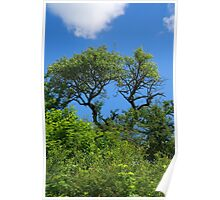 Old lonely tree springtime Poster