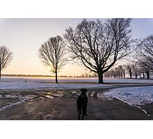 Mastiff Sunrise  Photographic Print
