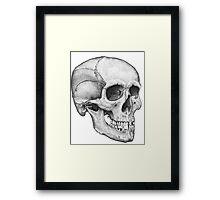 Human Male Skull Framed Print