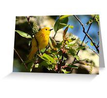 Yellow Warbler Greeting Card
