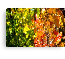 Colorful Fall Canvas Print