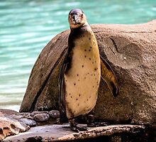 Poser Penguin by TrottShots