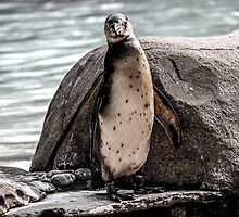 Poser Penguin (Grayscale) by TrottShots