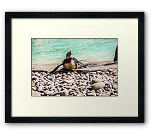 Belly Sliding Penguin Framed Print