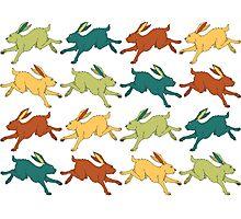 Multiply Like Rabbits Photographic Print