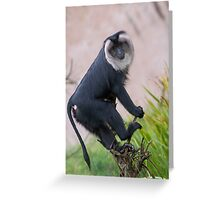 Lion Tailed Macaque Greeting Card