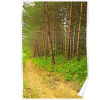 Pine forest near mud road alley Poster