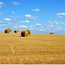 French wheat field by graceloves