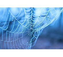Spider web with water droplets on a blue background Photographic Print