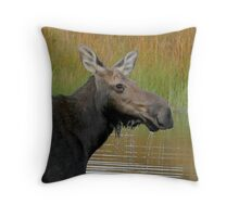 Maine Moose at dusk Throw Pillow