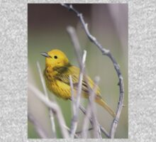 Yellow Warbler in the Reeds One Piece - Short Sleeve