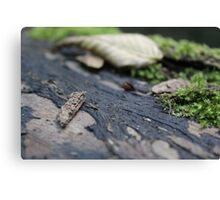 Beauty in nature - Dibbinsdale Nature Reserve 1 Canvas Print