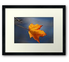 Golden maple leaf Framed Print