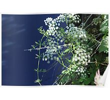 Beauty in nature - Dibbinsdale Nature Reserve 10 Poster