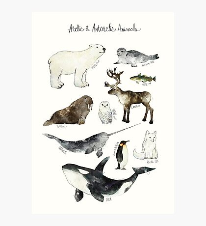 Arctic & Antarctic Animals Photographic Print