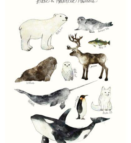 Arctic & Antarctic Animals Sticker
