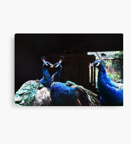 Love in Peacocks Canvas Print