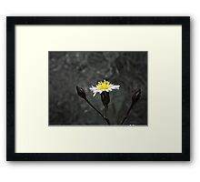 ©NS White Winter Bloom ONFX. Framed Print