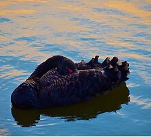 Black Swan by Ommik