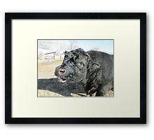 What Chocolate Eggs? Framed Print