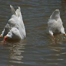 Goose down! by Denzil