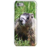 Yellow-Bellied Pup iPhone Case/Skin