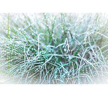 Sweet Grass Photographic Print