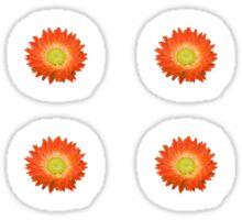 Daisy - Orange and Yellow Sticker