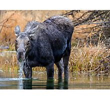 Breakfast at Snake River Photographic Print