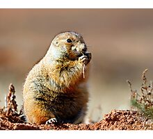 Prairie Dog Portrait Photographic Print