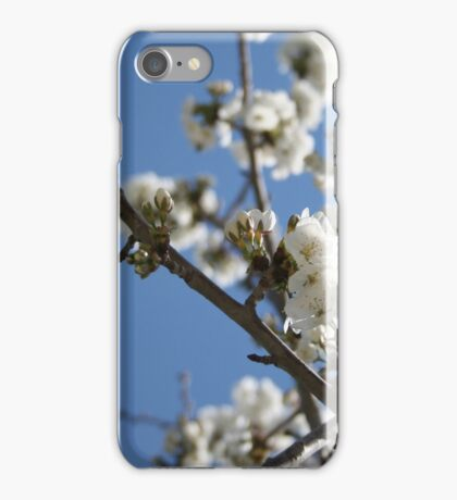 Cherry Blossom Branches Against Blue Sky iPhone Case/Skin
