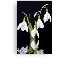 Snowdrop Reflection Canvas Print