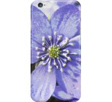 violet glory  iPhone Case/Skin