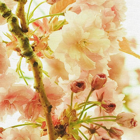 Dreaming in Blossoms by Liz Scott