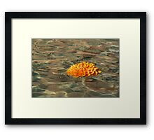 Floating Sunshine - a Vivid Orange Chrysanthemum in Velvety Fountain Reflections Framed Print