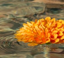Floating Sunshine - a Vivid Orange Chrysanthemum in Velvety Fountain Reflections Sticker