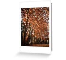 Majestic Plane trees Greeting Card
