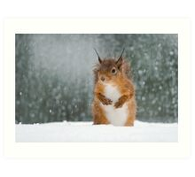 Red Squirrel in the Snow Art Print
